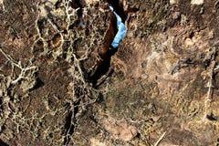 Querschnitt des Baums stockfoto