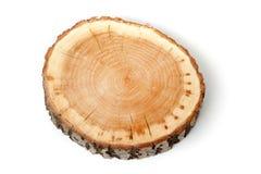 Querschnitt des Baumstammes auf weißem Hintergrund Stockbild