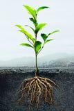 Querschnitt des Bodens mit einer Grünpflanze Stockfoto