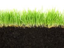 Querschnitt des Bodens und des Grases Stockfotografie
