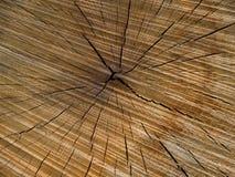 Querschnitt des Eichenstammes 2, Detail Stockbild