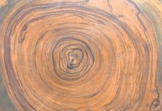 Querschnitt des Zedernbaums Grafische Betriebsmittel, hölzerner Hintergrund lizenzfreie stockfotografie