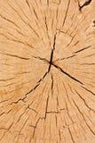 Querschnittbaumstumpf Lizenzfreies Stockbild