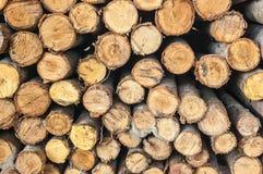 Querschnitteukalyptusholz Stockfotografie