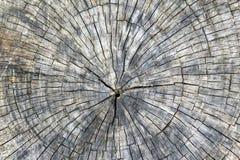 Querschnittschnitt des Baumstumpfs mit Jahresringen und Fragment masern Hintergrund stockfotografie