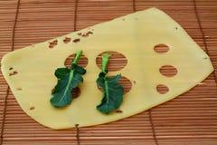 Queso con la hoja del bróculi fotografía de archivo libre de regalías