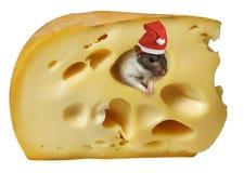 Queso y rata Fotografía de archivo