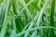 Questa foto religiosa di un ambiente verde fertile della giungla e l'erba alta con luce solare di mattina che versa dentro, è un  Immagine Stock