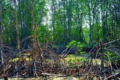Questa immagine è circa foreat, Tailandia Fotografia Stock Libera da Diritti