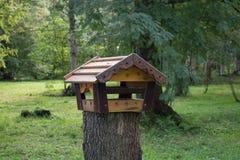 Questa sala da pranzo per gli uccelli nella foresta Immagini Stock