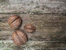 Questi hanno asciugato i frutti della noce hanno avuti gusci duri con di legno come fondo Immagini Stock