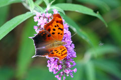 Free Question Mark Butterfly Stock Photos - 15322033