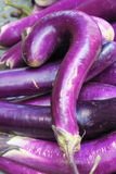 Question mark eggplant Stock Images