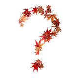 Question mark made by maple autumn leaves Royalty Free Stock Photos