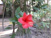 Questo fiore ha potuto essere segno di amore fotografia stock