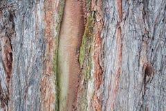 Questo fondo è fatto di legno fotografia stock