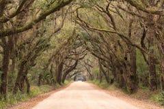 Sc spettrale del tunnel della quercia della strada della baia di botanica immagine stock libera da diritti