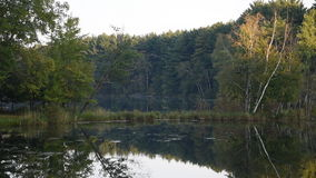 Quet Forested Pond stock footage