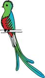 Quetzal Foto de Stock Royalty Free