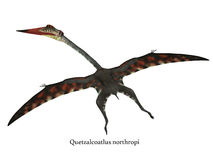Quetzalcoatlus与字体的飞行爬虫动物 库存例证