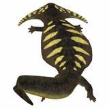 Queue amphibie de Diplocaulus illustration de vecteur