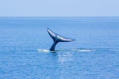 Queue de baleine images libres de droits