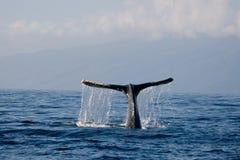 Queue de baleine Image libre de droits