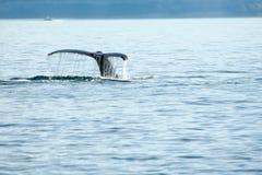 Queue de baleine image stock