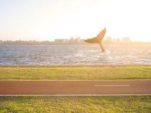 Queue de baleine de bosse ondulant en rivière photos stock