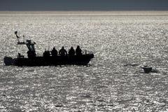 Queue de baleine de bosse près de zodiaque Photos libres de droits