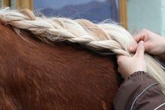 Queue de cheval, Images stock