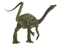 Queue de dinosaure d'Anchisaurus Images libres de droits
