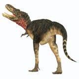 Queue de dinosaure de Tarbosaurus Photographie stock