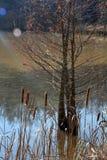 Queues de chat et un arbre de cigûe photographie stock libre de droits