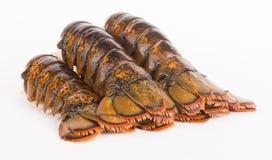 Queues de homard Photo stock