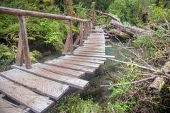 Queulat National Park, Chile. Enchanted forest trail in Queulat National Park, Chile Royalty Free Stock Images