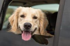 Quién es ese perrito en la ventana fotos de archivo libres de regalías