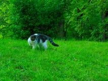 Qui Kitty Kitty Fotografie Stock Libere da Diritti
