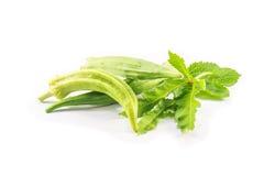 Quiabo verde isolado Imagens de Stock Royalty Free
