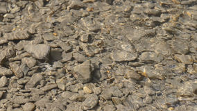 Quick clean water flow in the river in shallow water, through which can be seen big and small flat stones stock video