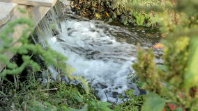 Quick forest stream. Fast river stream flowing in the summer day stock footage