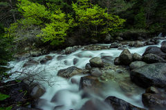 Quick Mountain River Stock Image