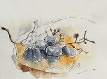 Quick sketch. Dark blue grapes on an orange plate royalty free illustration