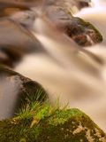Quick stream in motion over big mossy boulders. Mountain river with dark cold water, autumn is coming royalty free stock photo
