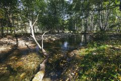 Quick transparent mountain river flowing among stones. In a beautiful Sunny grove Stock Image