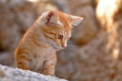 Quick-witted kitten. In all things very well-liked motive to take a photo royalty free stock photos