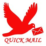 Quickmail. This is an image showing a bird carrying an envelope in its beak while flying. Birds travel long distances in a short time. The colour red portrays Stock Photos
