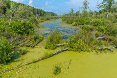 Quiddity Trail at Charleston Lake Royalty Free Stock Photos