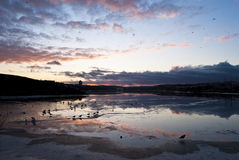 Quidi Vidi Evening. Frozen and Flooded Lake Reflecting Patterned Sky and Birds during Sunset Royalty Free Stock Image