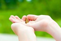 Quiera la naturaleza Manos de la muchacha que sostienen una pequeña mariposa Imagen de archivo